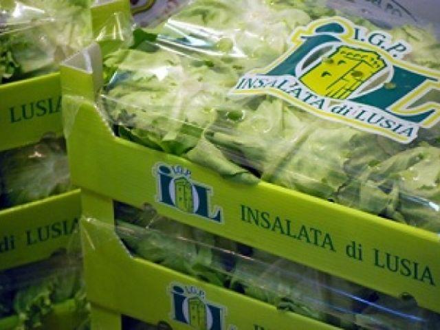 L'insalata di Lusia IGP uno degli ingredienti per il Risotto Insalata e Cozze
