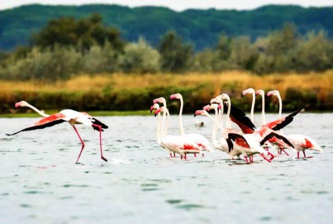 Il parco del delta del Po è il luogo ideale per praticare Birdwatching