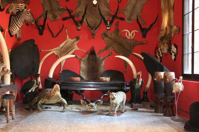 La sala del museo con la collezione di reperti di Giovanni Miani