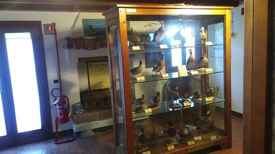 La sezione naturalistica del Museo della corte