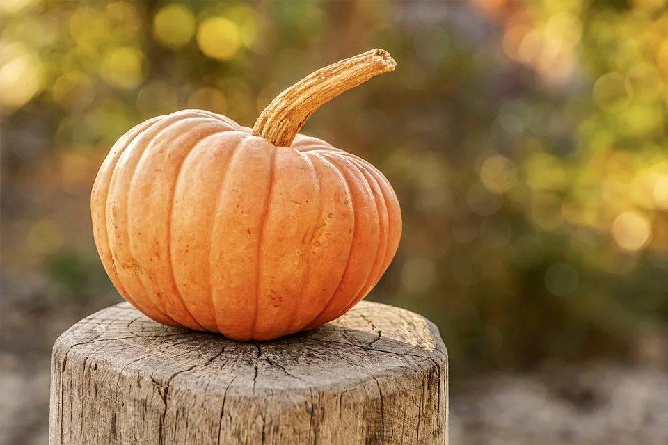 Pumpkin 4454745 960 720 (2)