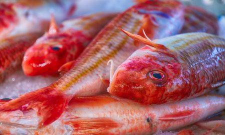 Fish 4582658 960 720