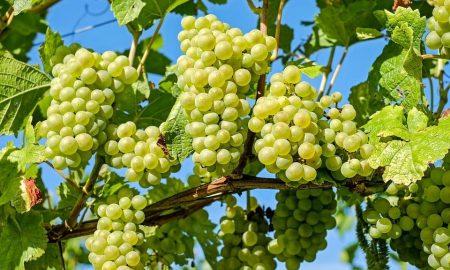 Grapes 2656259 960 720