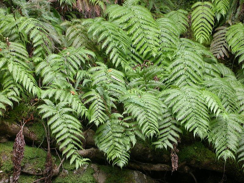 Wradicans Fotoserdio Common