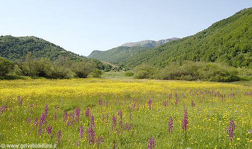 la Valle delle Orchidee