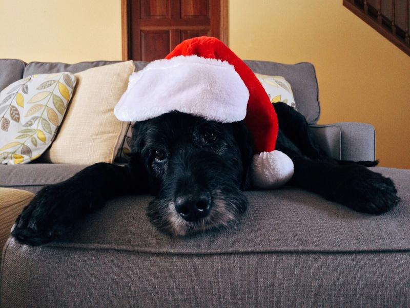 Cane - Natale