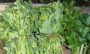 Orto del Cilento - broccoli a mazzetto, foto di Giuseppe Conte