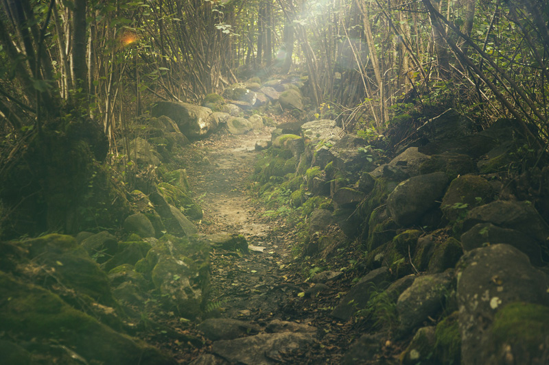 Leggenda - La foresta incantata attraversata dalla luce soffusa