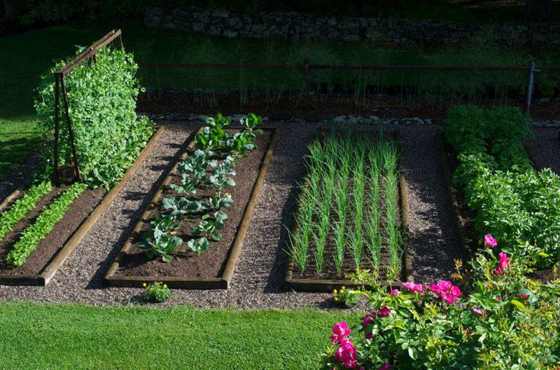 Mostra della Minerva - Un orto con piante e fiori
