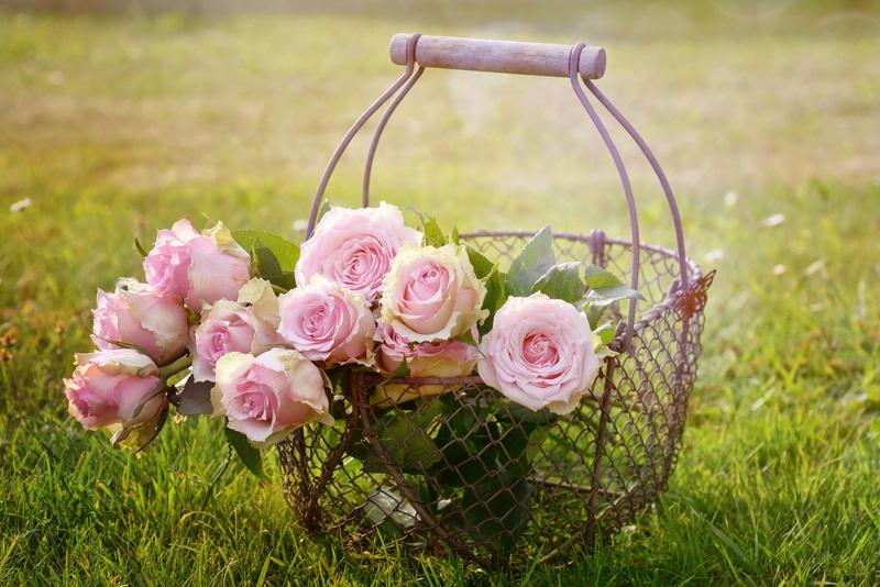 Mostra della Minerva - Delle rose in un cestino