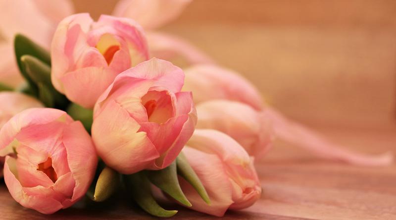 Mostra della Minerva - Tulipani in esposizione