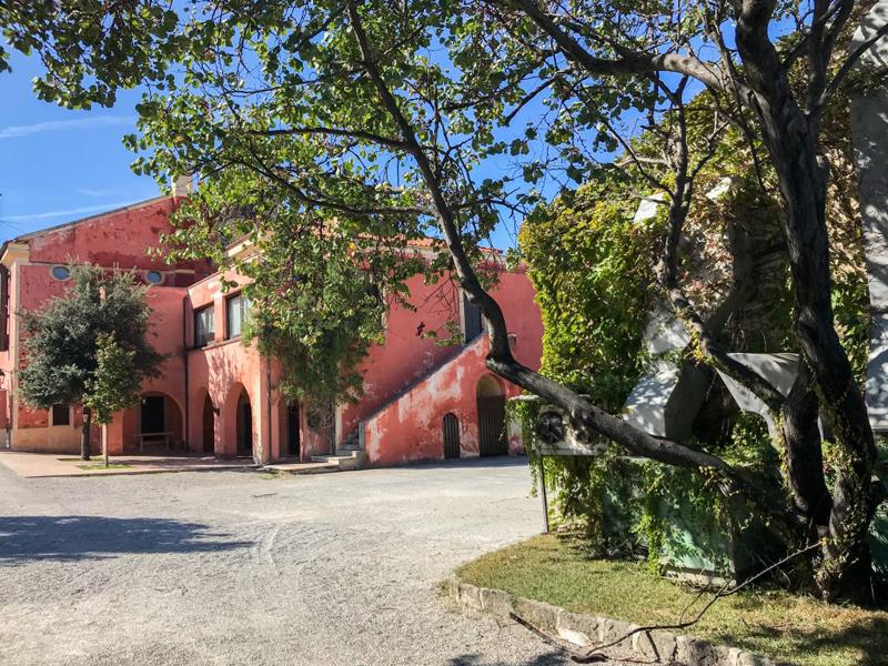 Tenuta Vannulo - Alberi con la tenuta sullo sfondo
