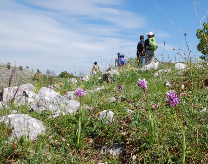 Valle Delle Orchidee - Uno scorcio del percorso