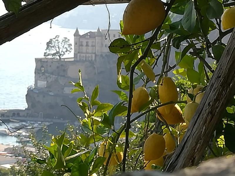 Amalfi - i limoni della Costiera
