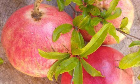 frutti del melograno in autunno