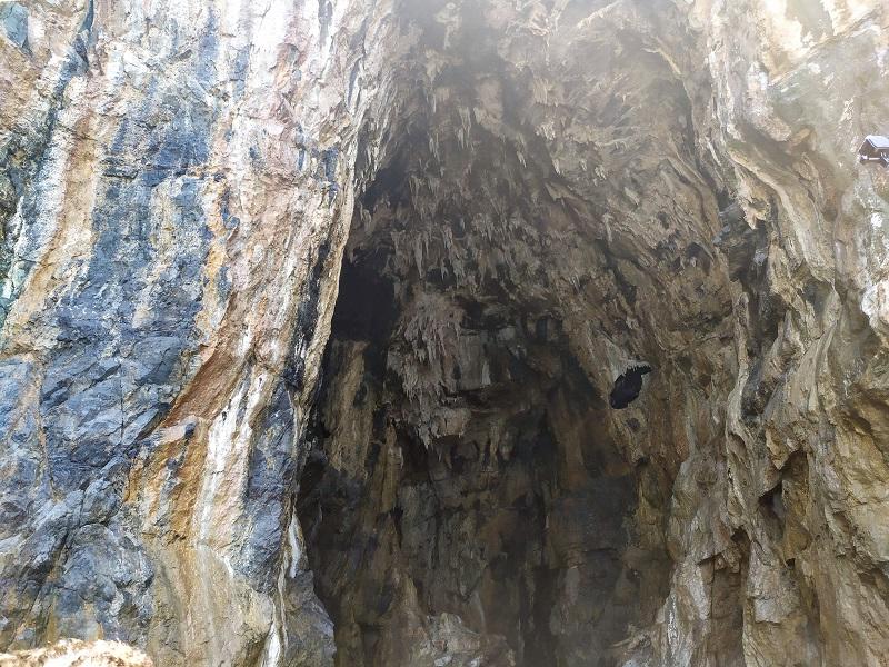 Grotte Paleontologiche