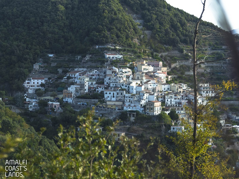 Albori Dal Bosco Monte Falerio