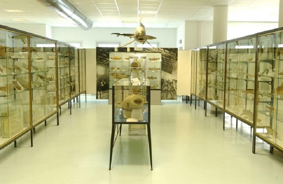 Il Museo del Mare: Il Museo Ittico