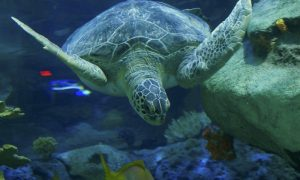 Ripley's Aquarium of Toronto