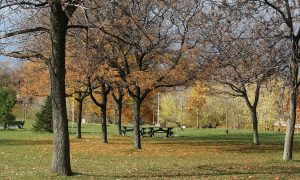 Christie Pits park in autunno
