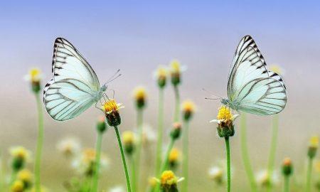 nature in motion: farfalle su fiori