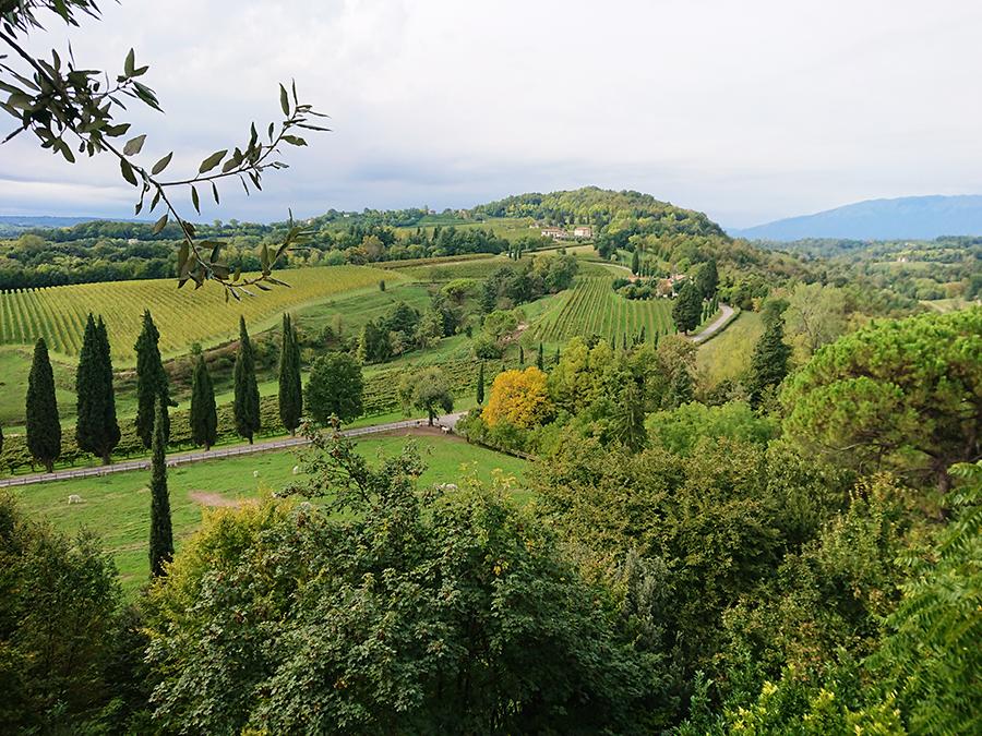 Castello San Salvatore_panorama collinare verdeggiante e montagne in sfondo
