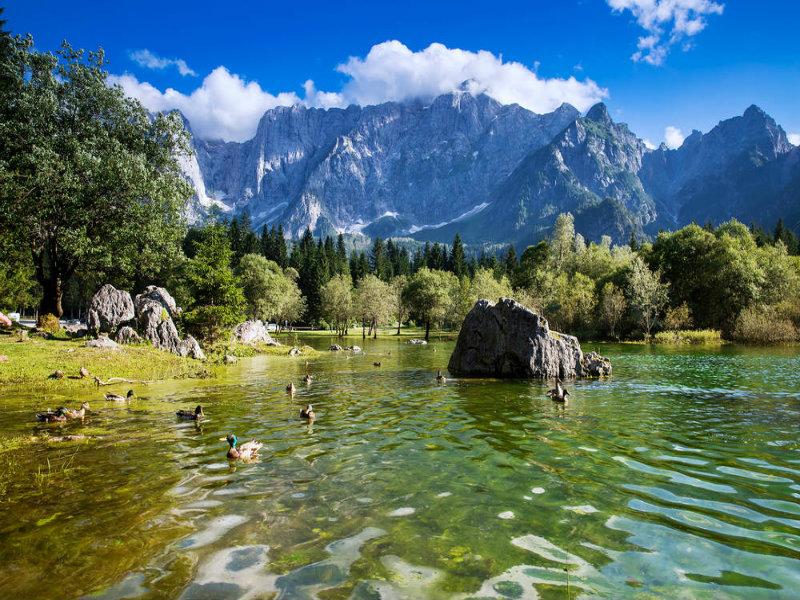Vista dei germani che abitano le sponde dei laghi di Fusine