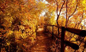 boschi e alberi del friuli con foglie ingiallite dall'autunno
