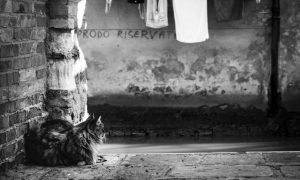 gatti veneziani
