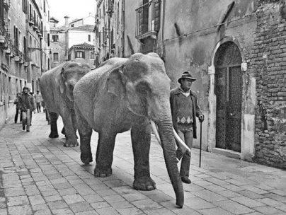 elefanti venezia