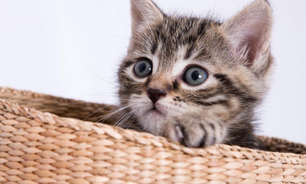 gatti più belli del mondo venezia