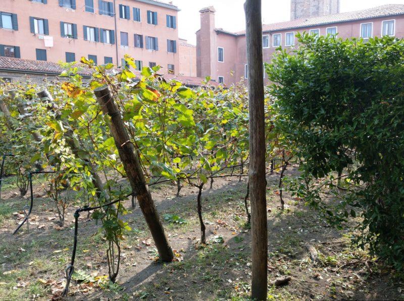vigne venezia vino