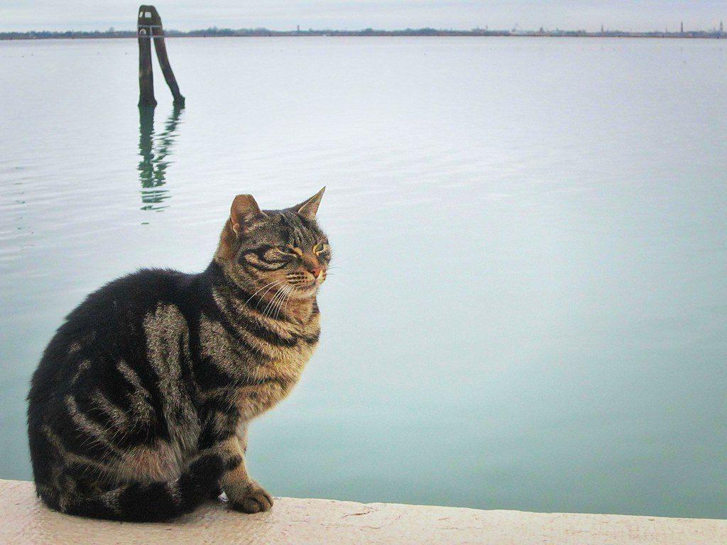 Ma i gatti hanno davvero paura dell'acqua?