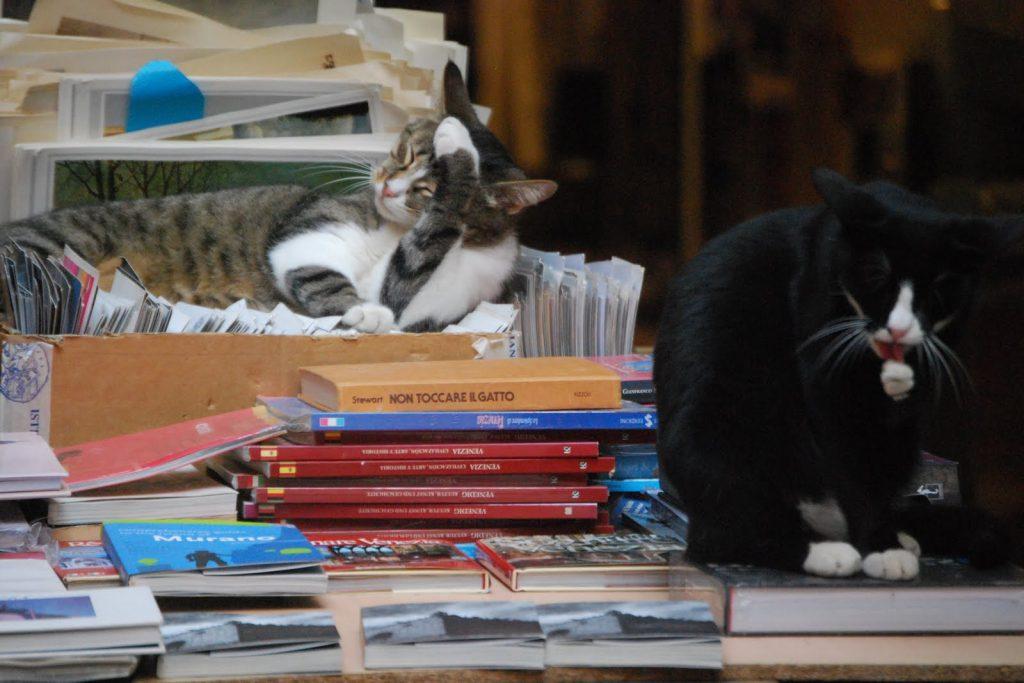 I Gatti della Libreria Acqua Alta