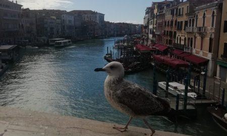 Venezia in quarantena - Gabbiano E Laguna