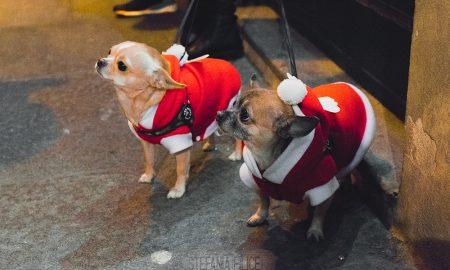 cani vestiti per Natale