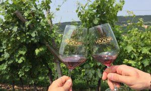 Cantine Aperte - l'evento dedicato al vino veronese