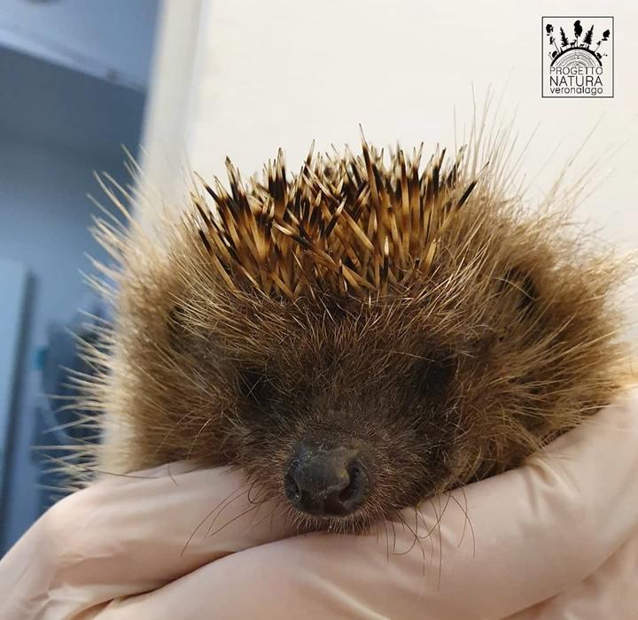 Gli Animali Dopo Le Cure Vengono Riportati Nel Loro Habitat Naturale