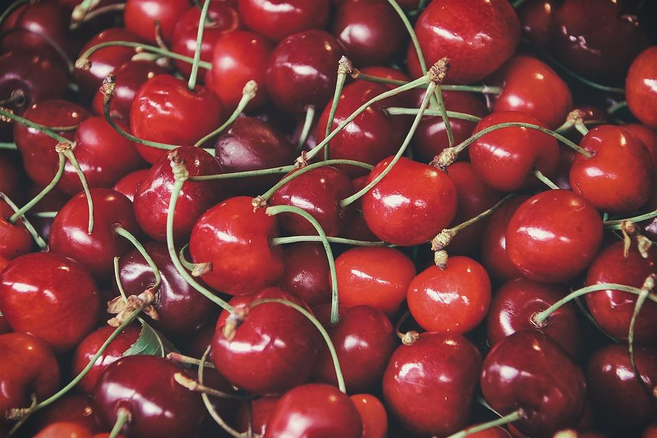 Le ciliegie di Marostica - Raccolta Di Ciliegie IGP